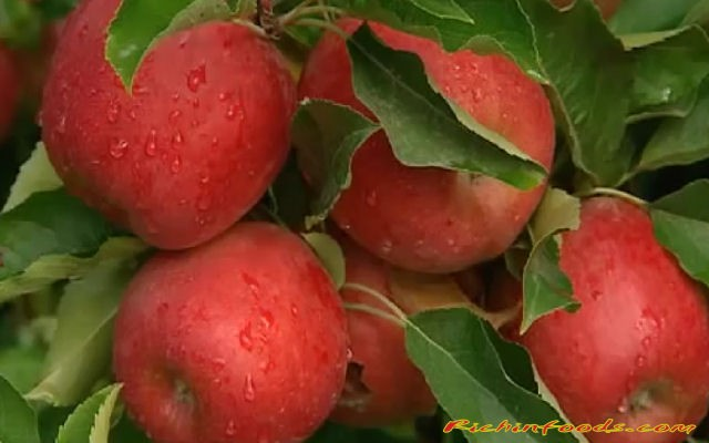 Benefits of eating apple on empty stomach
