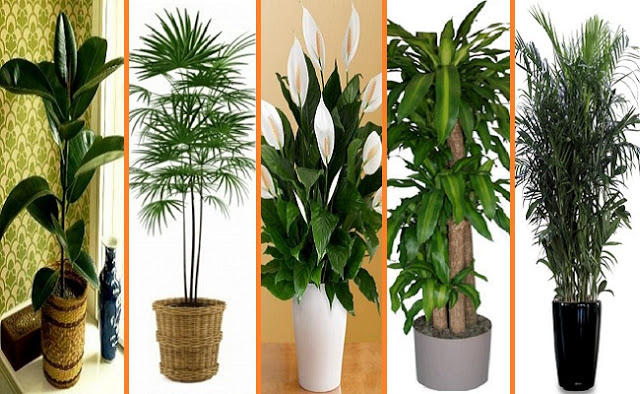 10-Best-Houseplants-That-Purify-the-Air